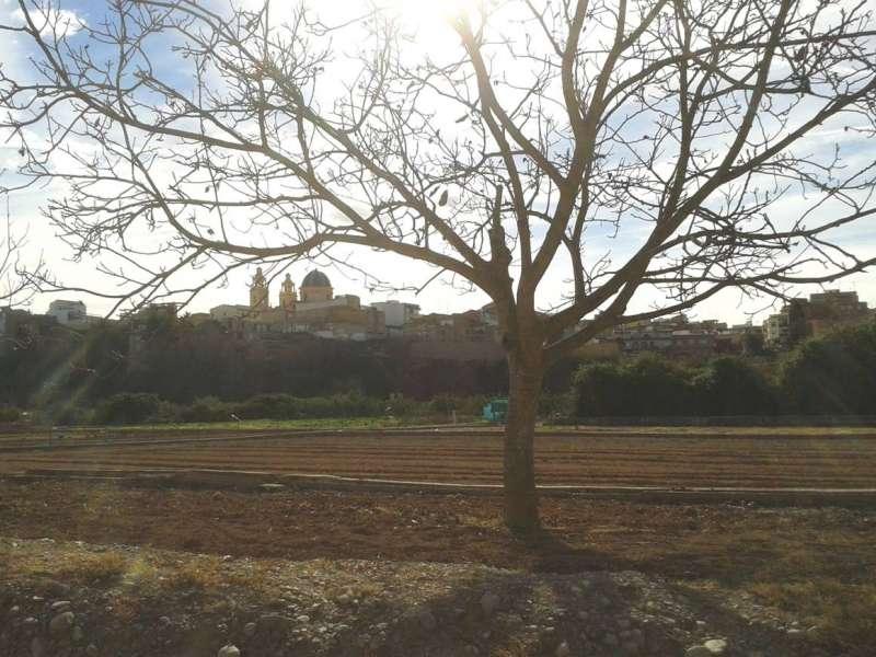Huerta del Parque Natural del Túria con el casco urbano de Riba-Roja al fondo. / EPDA