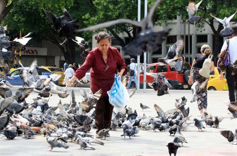 Una mujer alimenta palomas en un parque. EFE/Archivo