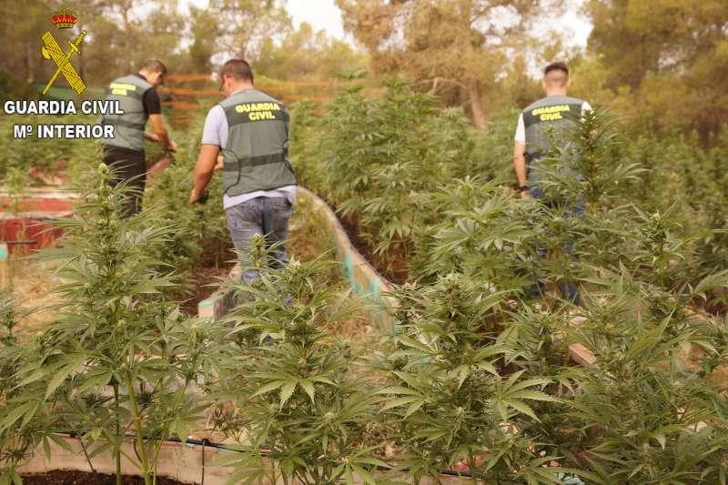 Marihuana incautada, imagen facilitada por la Guardia Civil. EPDA.