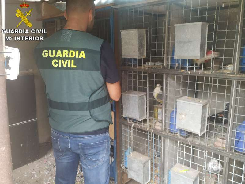 La Guardia Civil en la incautación de los palomos deportivos robados./ EPDA