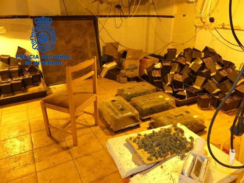 Imagen de la marihuana y otros productos intervenidos. EFE/Policía Nacional