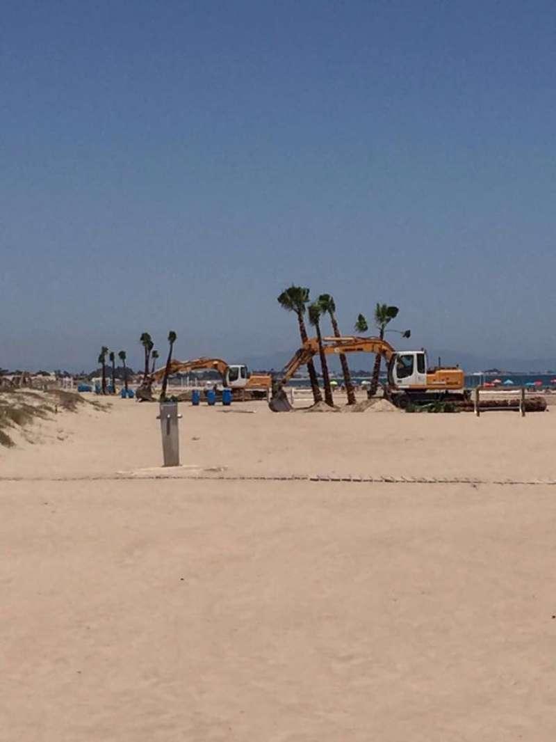 Plantación de las palmeras en la playa de Canet. EPDA