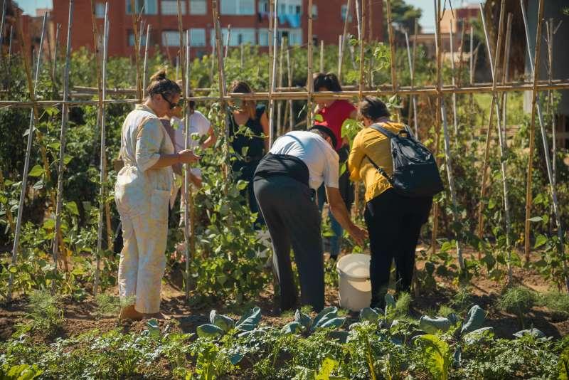 Els assistents a la primera jornada pogueren recol·lectar verdures del camp per al taller de paella que va impartir l?empresari Toni Montoliu a Meliana. / epda