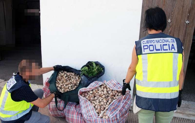 Cápsulas de adormidera incautadas por la Policía Nacional. EPDA