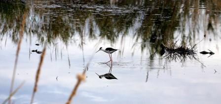Las lluvias han permitido que el Marjal dels Moros tenga un aspecto envidiable, ideal en esta época de nidificación. FOTO: EPDA.