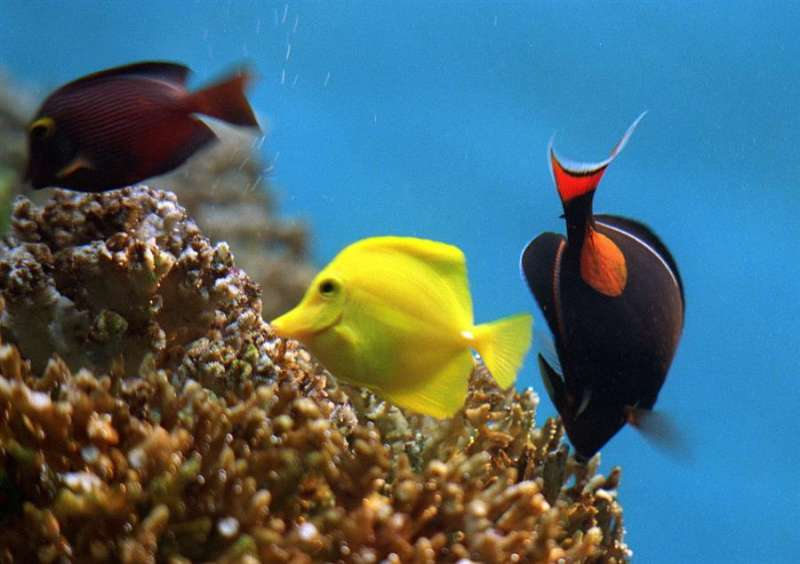 Varias especies de peces exóticos. EFE/Archivo
